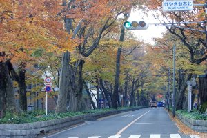 Babadaimon Zelkova Avenue, Fuchu City