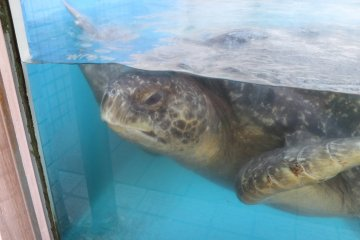 Una tortuga de mar