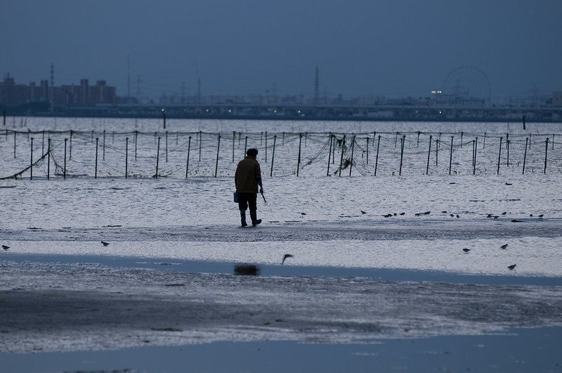Dig for clams on Sanbanze tidal flat