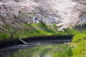 The now tamed Ebi River in spring