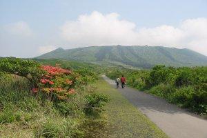 Mt. Mihara, home to the cherry tree stump