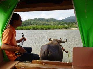 Chuyến đi của chúng tôi trên chiếc xe đẩy từ đảo Yubu đến đảo Iriomote