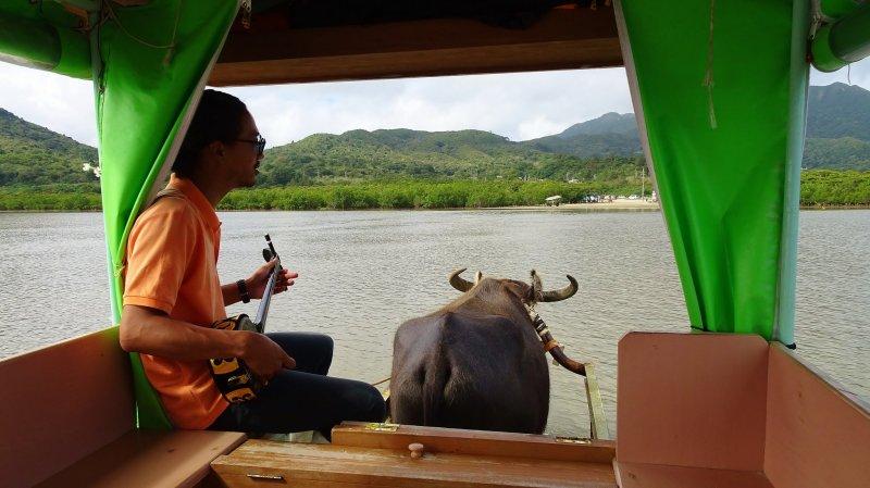 Nuestro paseo en una carreta desde la Isla Yubu hacia la Isla Iriomote