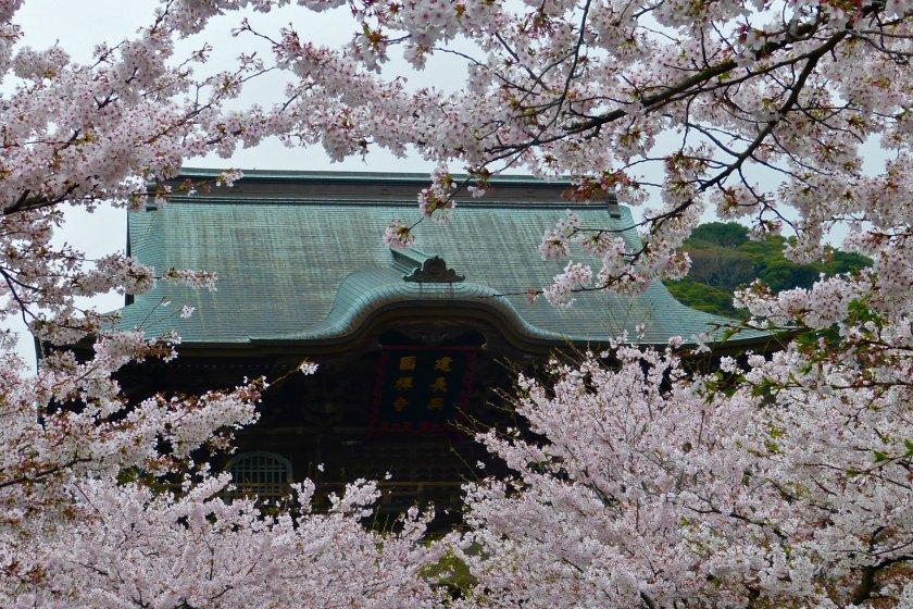 Telhado do Portão San-mon, rodeado de flores de cerejeira
