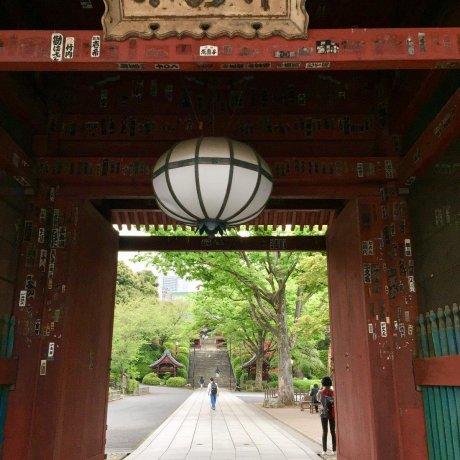 Kuil Gokokuji Dan Kucing Gendut