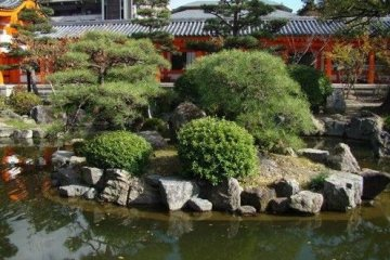庭院的小池子