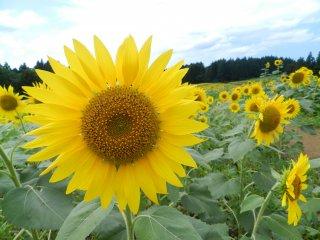 Солнечные дни в Цуруоке.
