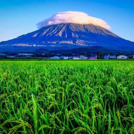 Mt. Yotei