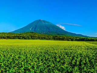 My favorite location to view Yotei on a clear day is the potato farms along Route 478