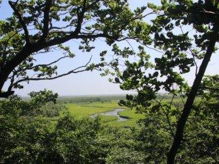 Vue du marais depuis le Cap Kirakotan