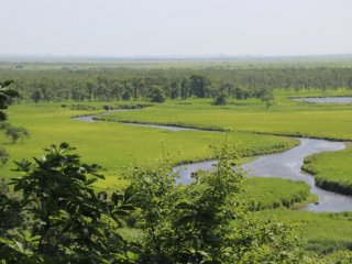 Vue du marais de Kushiro