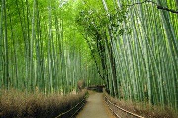Arashiyama is a refreshing getaway