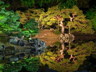 松の樹に今にも動きそうな躍動感を感じる