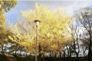 Salah satu pohon di taman