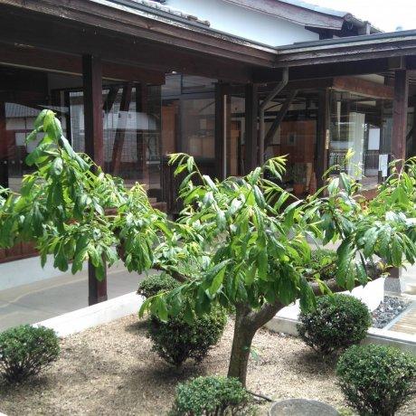 Bizen Osafune Sword Museum's Deadly Beauties