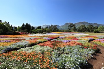 5 Flower Parks to Visit in Kyushu
