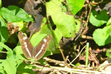 Butterflies enjoy the sunny day.