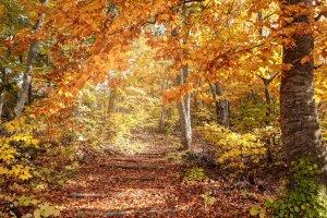 Autumn leaves up in Aomori Prefecture
