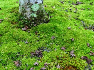 There are so many shades of green in the Moss Garden