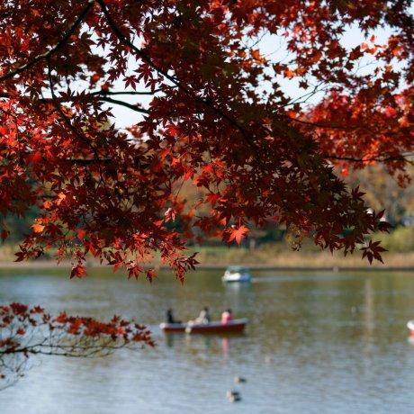 Akishima City - Parks & Gardens