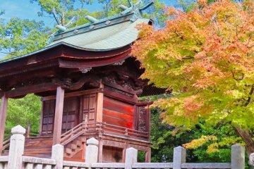 Saijo Matsuo Shrine's early fall colors