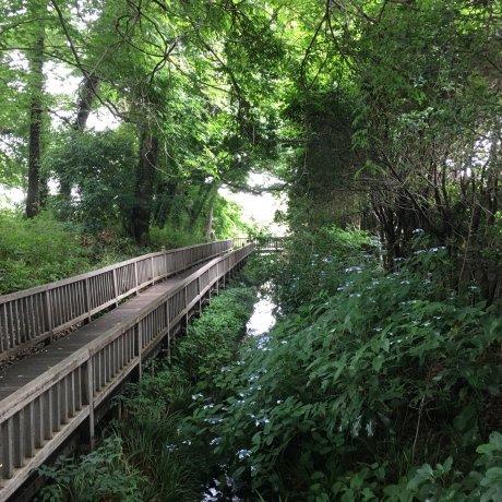 Kiyose City - Parks & Gardens