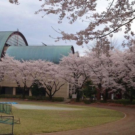 Kodaira City - Parks & Gardens