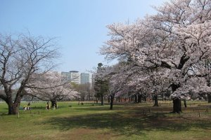 Musashino Central Park
