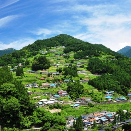 Free Nishi-Awa Virtual Tour: Explore Food, Culture, and Nature! [已取消]