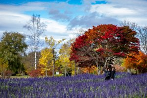 Top Things to Do in Obihiro, Japan