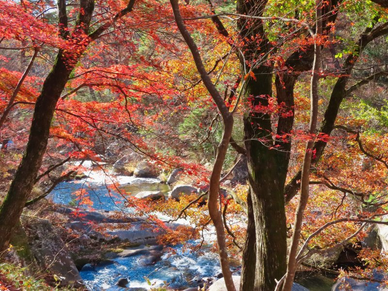 荒川的秋色