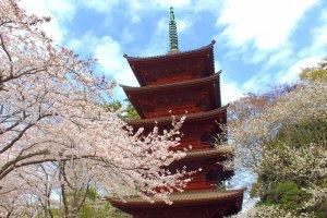 Hokekyoji pagoda in spring