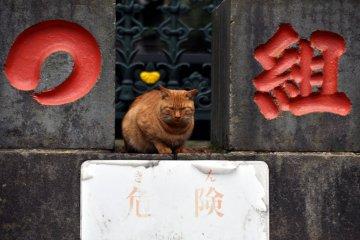 Suginami City Ward - Temples & Shrines