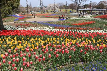 Kiso Sansen Park Tulip Festival