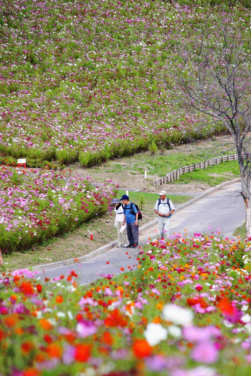 Taiyo-no-Oka Engaru Park is a delight in autumn