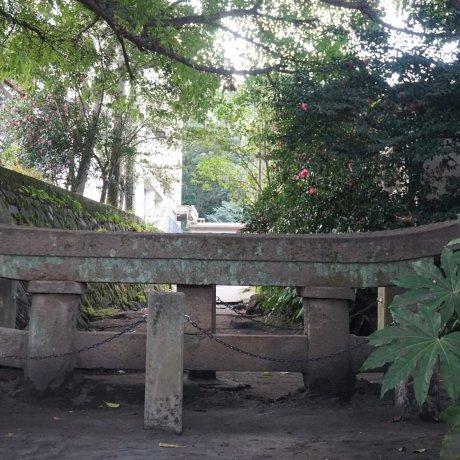 南日本的自然遗产
