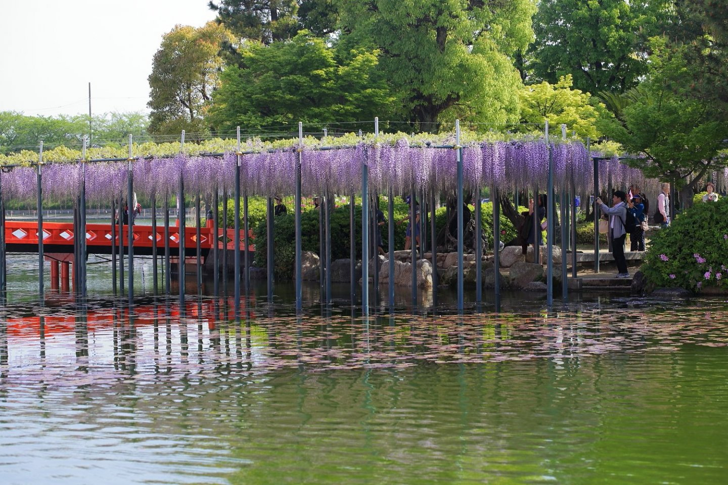 A number of wisteria trellises at the event overhang the water - dreamy!