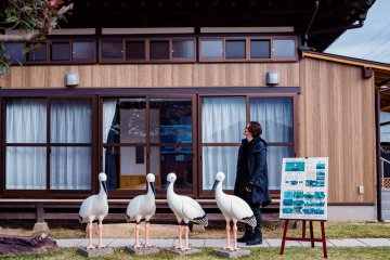 The recently opened Japanese White Stork Cultural Exchange Center—the models are life-size.