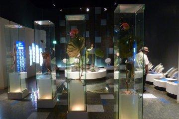 Lotus Flower Museum
