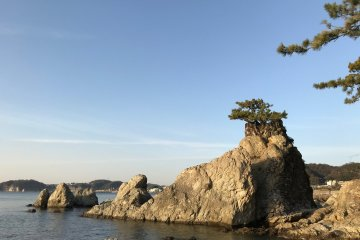 The senganmatsu pine tree at the rear of the shrine