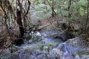 Forest near river in the Nikko area.