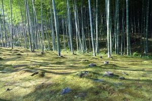 Bamboo forests could be found near most villages in the old days.