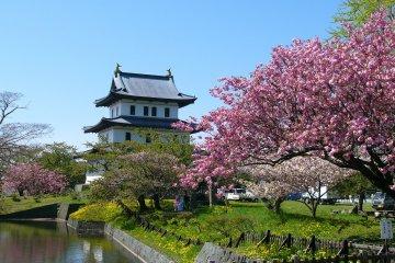 Matsumae Park Cherry Blossom Festival
