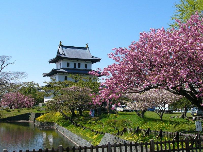 Beautiful blooms at Matsumae Park