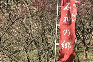 Kishu Ishigami Tanabe Ume Orchards and the Minabe Ume Orchards in the local neighborhood are large