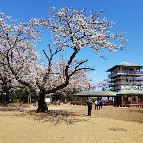 Kanagawa's Ikuta Ryokuchi Park