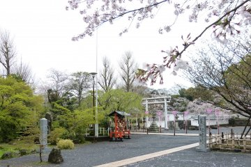 Sakura Season at Omura Park