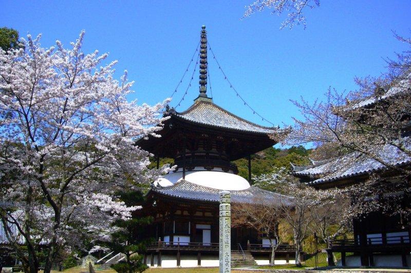Beautiful Negoro-ji in spring