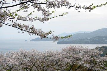 The Yunoko Cherry Line in Kumamoto