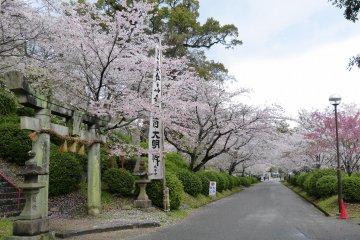 Ogi Park, Saga